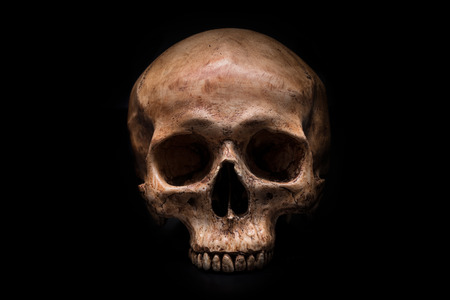 frontview of human skull on isolated black background