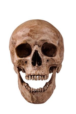 Frontview del cranio umano bocca aperta su sfondo bianco isolato Archivio Fotografico - 28216523