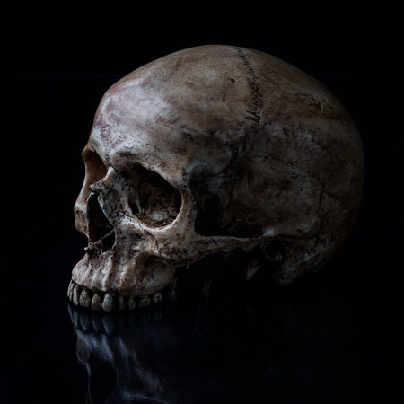 human skull: Sideview of human skull open mouth on isolated black background Stock Photo