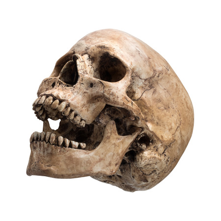 sideview of human skull open mouth on isolated white background photo