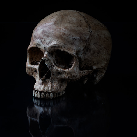 Sideview of human skull open mouth on isolated black background photo