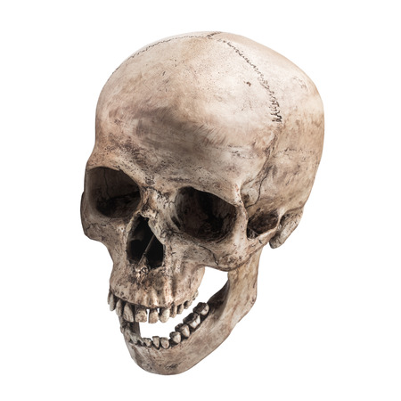 sideview of human skull open mouth on isolated white background