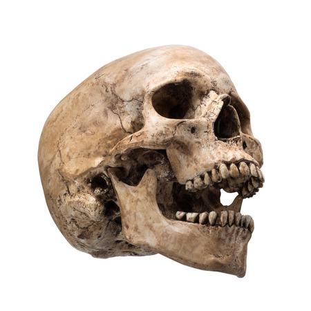 calavera: lateral de cráneo humano con la boca abierta en el fondo blanco aislado