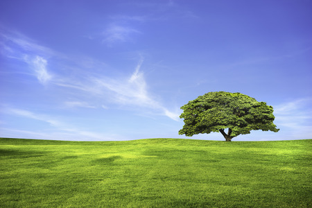 Lonely tree in green grass field and blue sky photo