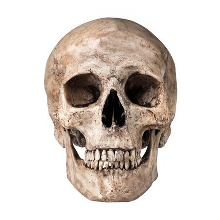 calavera: Cráneo humano en el fondo blanco aislado