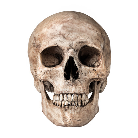Human skull on isolated white background photo