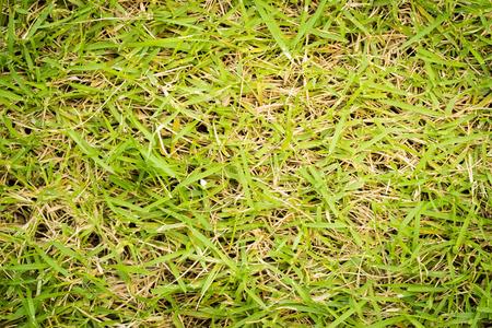 Nature green grass texture background photo