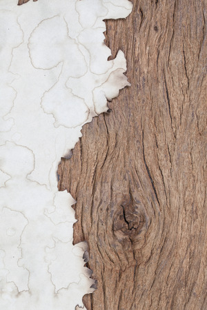 wall paper: burn paper on grunge wood with space Stock Photo
