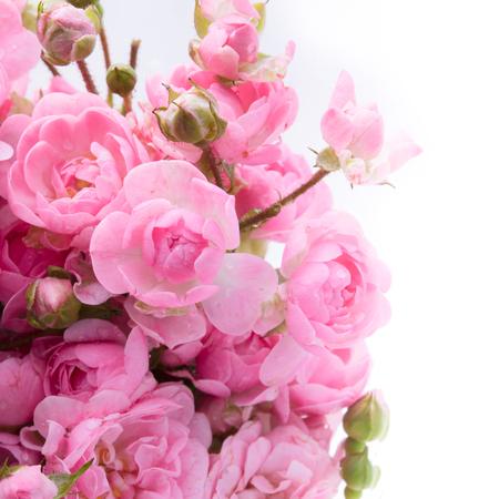 mazzo di fiori: Bouquet di rose rosa con spazio libero per il testo, soft focus