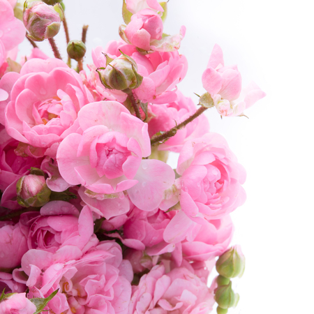 Pink roses bouquet with free space for text, soft focus