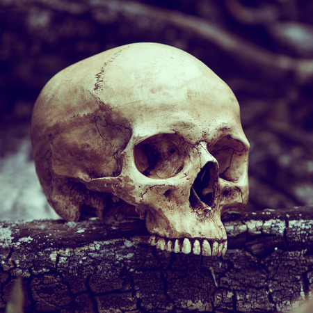 the ashes: Still life with human skull on ashes in the forest Stock Photo