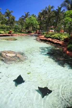 bahamas: Atlantis Hotel on Paradise Island in Nassau,Bahamas. Stock Photo