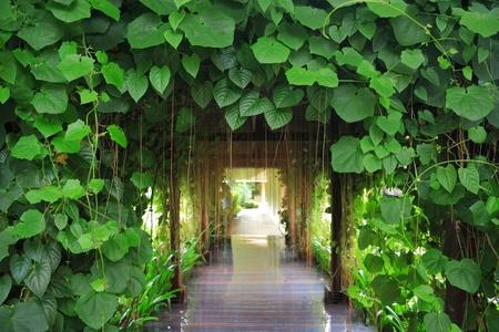 passageway: green old passageway , Thailand.