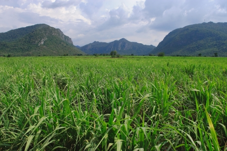 cuntry: Hight mounten and green tropical jungle , Thailand.