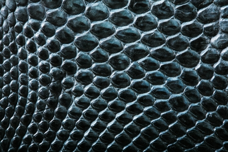 the reptile: wild crocodile skin pattern in many style. Stock Photo