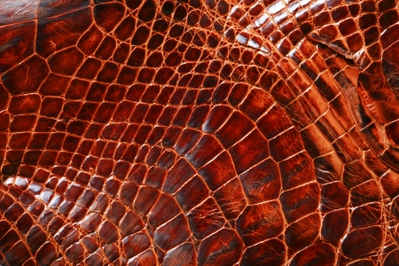 animal scale: wild crocodile skin pattern in many style. Stock Photo