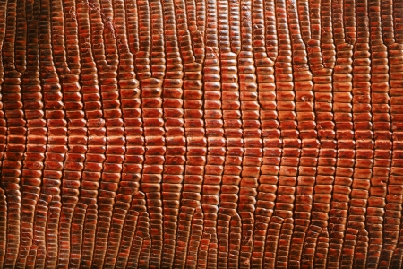 snake skin: wild crocodile skin pattern in many style. Stock Photo
