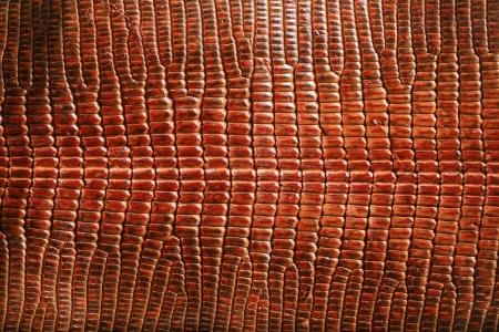 lizard: wild crocodile skin pattern in many style. Stock Photo