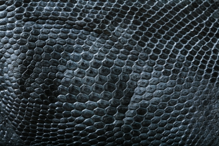 wild crocodile skin pattern in many style. photo