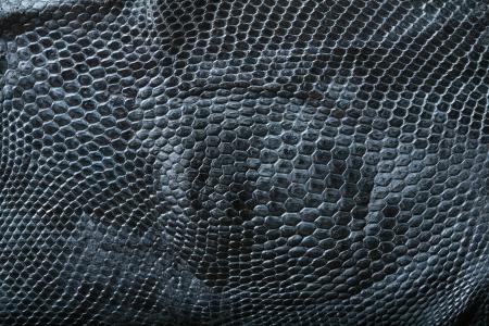 Wilde Schlangenhaut Muster in vielen Stil. Standard-Bild - 15443661