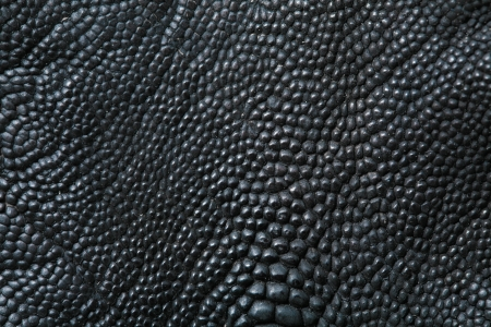 leather texture: wild crocodile skin pattern in many style. Stock Photo