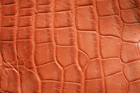 wild crocodile skin pattern in many style. photo