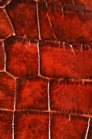 wild crocodile skin pattern in many style. Standard-Bild