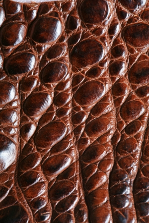 snakeskin: wild crocodile skin pattern in many style. Stock Photo