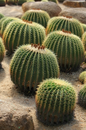 led spine of Cactus in many stye photo