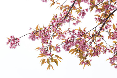 blossom tree: close up nature in many patten style