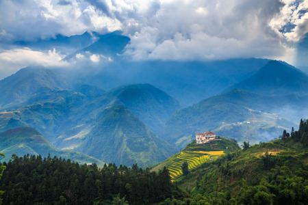 agriculture azores: Flowers from a valley in Vietnam. Editorial
