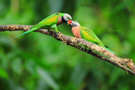 two parrots: Parrot-shaped and very colorful. Stock Photo