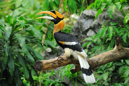 feature: Hornbill colorful and feature the head.