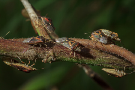 Many insects perched on a branch.