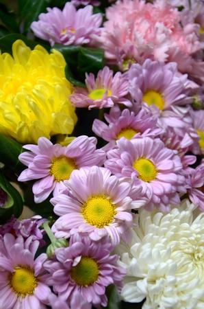 violer flower