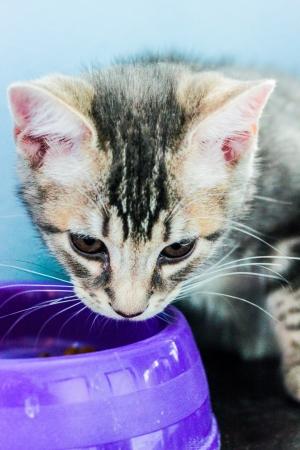 inocent: kitten Stock Photo