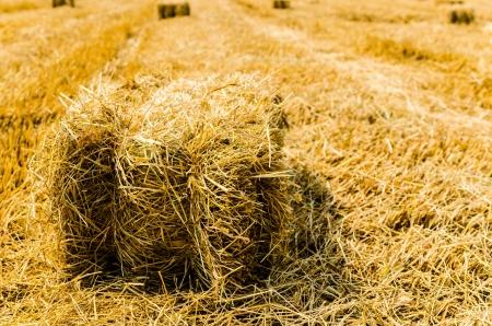 hay field: Hay campo
