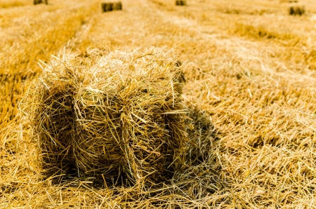 Hay field photo