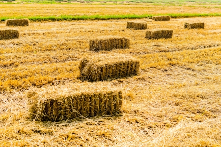 Hay field land  photo