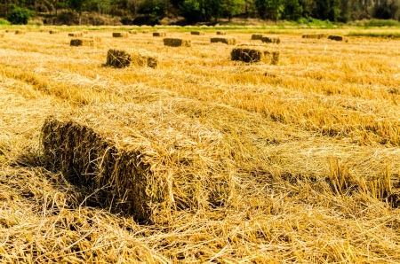 Hay farmland photo