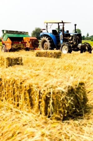 Tractor harvesting rice Stock Photo - 19312341