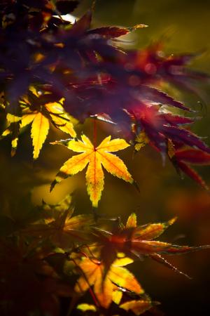 Orange fall leaves border
