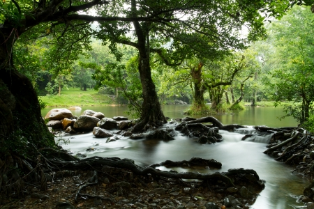 Water Stream And Tree