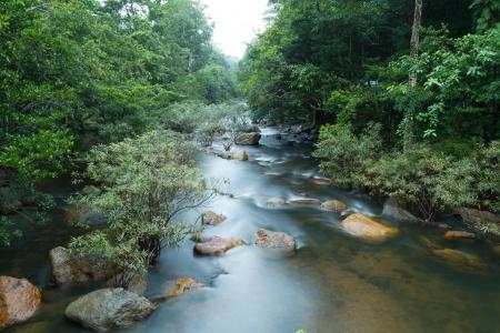 Water Stream In Rainy season