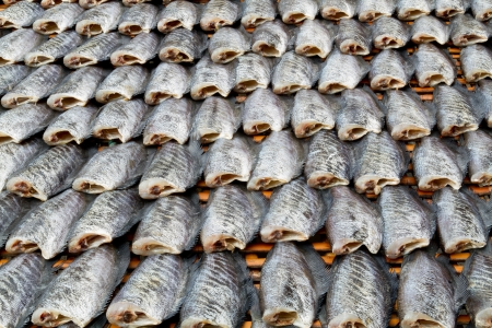 Rows of dry fish