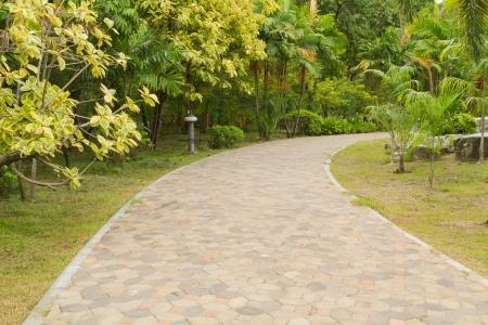 pathway in plants garden Stock Photo - 15424586