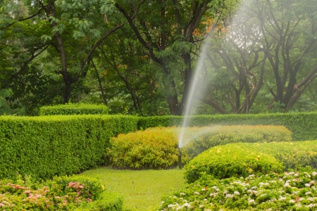 water sprinkler in garden photo