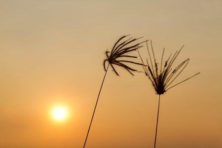 Image of sunset grass flower