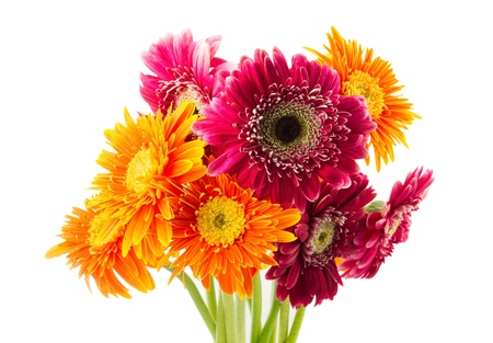Gerbera flowers isolated on white