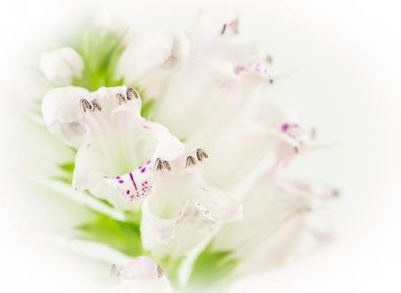 Closeup of white flower on white background